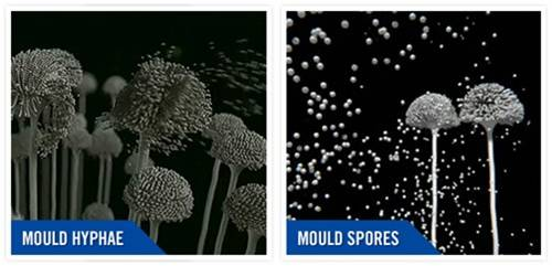 Cleaning services mould spores