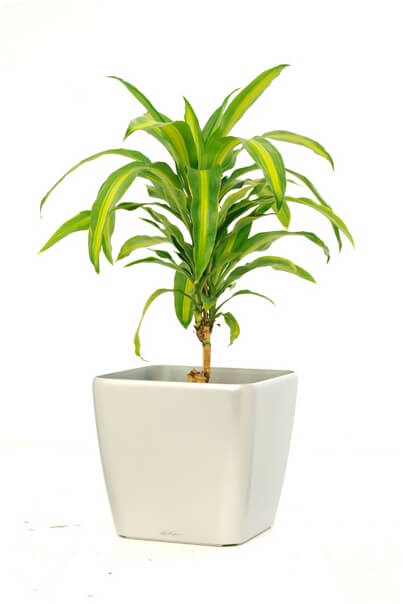 Clean Care Mobile office cleaning dracaena